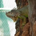 iguana tree by block 5