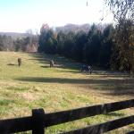 Property has stables with horses...grazing in the fields