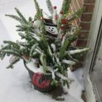 Pretty plant in the snow outside