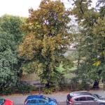 Park outside the window