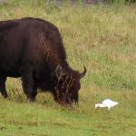 love sitting on the front porch watching the buffalo