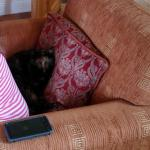 If you leave your window open. It`s trying to push my wife out of the chair
