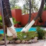 amazing trees by the pool