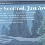 The Sentinel Info