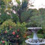 A view of the garden from my room