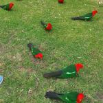 beautiful Parrots to feed