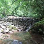 Little River in campground