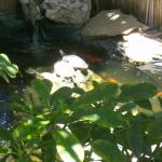 Turtle pond next to our patio, Cool