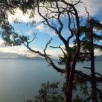Arbutus tree overlooking the straits
