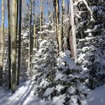 Beautiful snow and trees