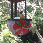 Room comes with bird feeder: if you put sugar in, it will soon be swarming with bananaquits!