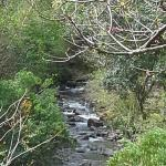 A view to the little river that crosses the State Park.