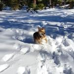 My girl, zooming along in piles of snow.