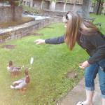 Feeding the Geese and Ducks.