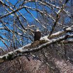 Sunwolf Eagle Viewing Float Tours - Day Trips