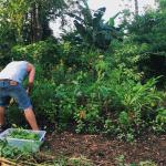 Permaculture harvesting