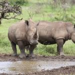 East Coast Safaris - Day Tours
