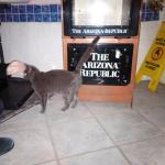 Cat in front of Space Age Restaurant