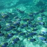 Snorkelling at house reef