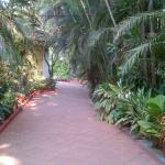 Pathway to our building