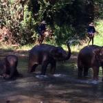 Photo of The Elephant Training Center Chiang Dao
