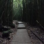 Bamboo forest Ohe o gulch