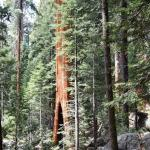 Photo of Sequoia Sightseeing Tours