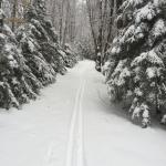 Cross country ski trails at Edson Hill