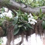 Orchids in the trees are beautiful