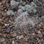 One of the many cactus in the area