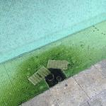 Poor excuse for a 'pool area'