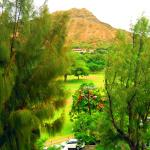 Photo of Lotus Honolulu at Diamond Head
