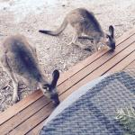 This was take from our verandah. This kids loved feeding the roos.
