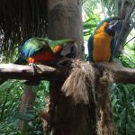Very small park, good collection of birds, doesn't worth $50 entry fee..