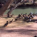 A park area on grounds that is next to Oak Creek Canyon.  You can feed the ducks.