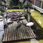 Photo of Gator Park