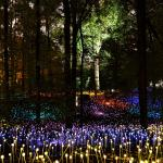 The Atlanta Botanical Garden's forest at night, during their recent light exhibit