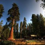 Sequoia National Park2