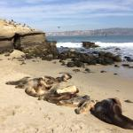 Harbor Seals on the Shore