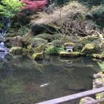 The gardens have tons of Koi fish