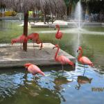 Pink flamingos enjoying the pond and fountain by the lobby