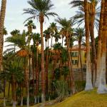 Grounds and Palms of Furnace Creek Inn