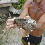 Our guide showing us the Stonefish, the most venomous fish in the world!
