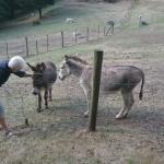 Patting the donkeys
