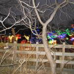 Some of the lights at the Zoo