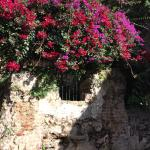 A crumbling wall in the garden