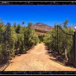 Photo of Gooding's Groves Olive Farm & Guest House