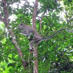 One of a family group of monkeys which crossed our path