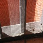 Nothing like some bug and wasp nests outside your deluxe suite...