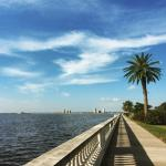 Bayshore Blvd. - Taken on a morning run